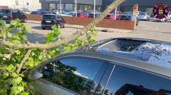 El vecino del municipio circulaba con su coche cuando el impacto con la rama rompió el techo de cristal de su vehículo provocando cortes
