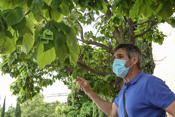 El ayuntamiento coloca 200.000 insectos para luchar contra los pulgones y la cochinilla algodonosa