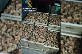 Viajaban con su mercancía desde Castilla y León, donde la recogida de setas está regulada