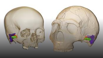 Un hito histórico logrado por la Cátedra de Otoacústica Evolutiva y Paleoantropología de HM Hospitales y la Universidad de Alcalá