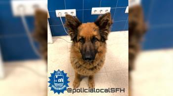 La perra ha sido devuelta a sus dueños tras haber sido localizada en el día de ayer