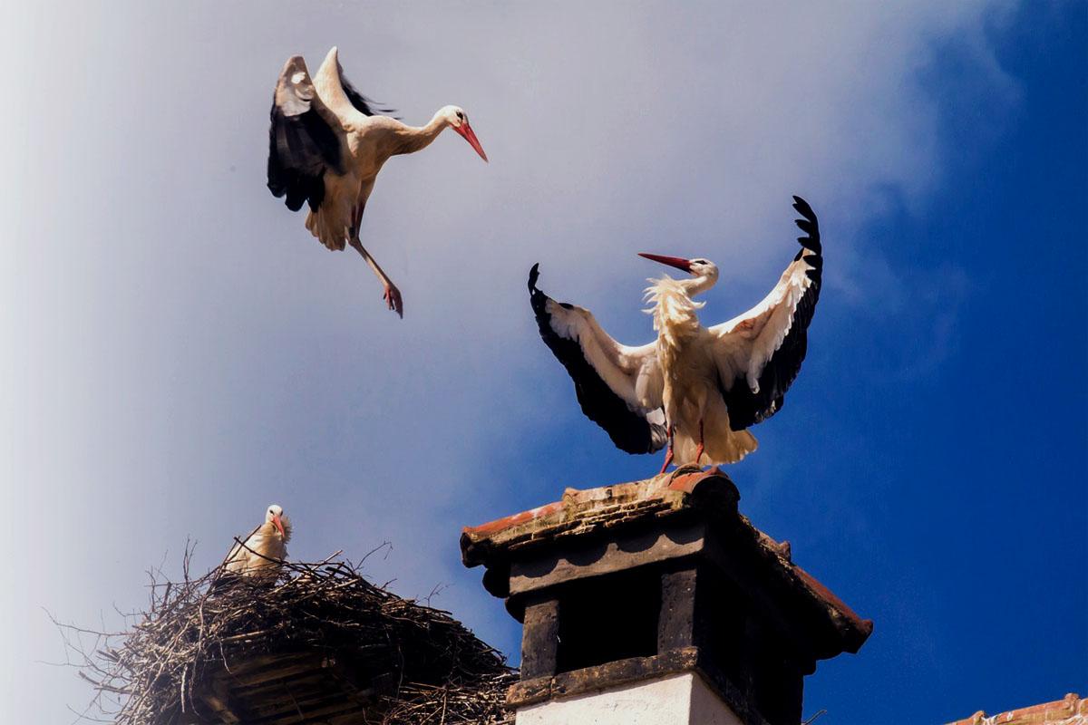 Nuestras aves más significativas recobran protagonismo e impactan al mundo entero