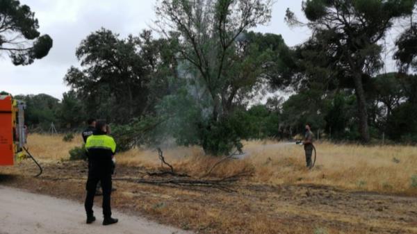 Un árbol comenzó a arder debido a la caída de un rayo