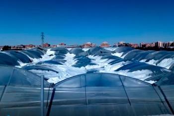 El campo es una de las víctimas que se ha cobrado la 'Borrasca Filomena' causando pérdidas de un millón de euros en Fuenlabrada