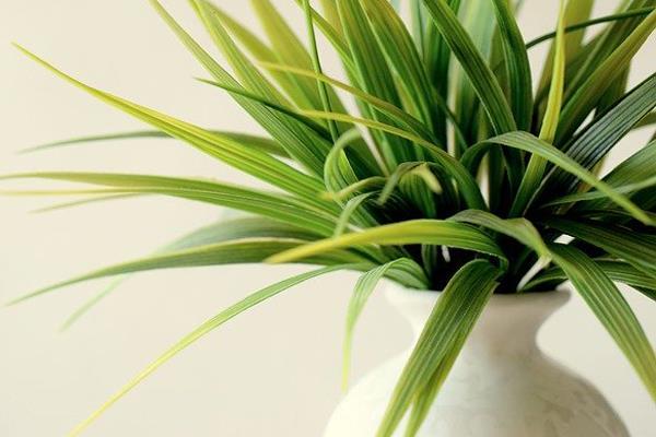 Las nuevas tecnologías te ayudan a mantener tus plantas frondosas y sanas con menos esfuerzo