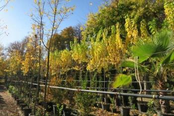 Del total, 2.300 ejemplares se van a plantar en cuatro distritos: Ciudad Lineal, Hortaleza, San Blas-Canillejas y Barajas