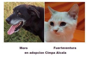 El Centro de Protección Animal, que ha contratado una nueva licitación, ha gestionado más de 500 adopciones