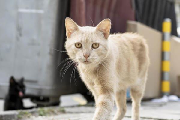 Medio Ambiente ya no se ocupará de mantener las colonias felinas en Pinto
