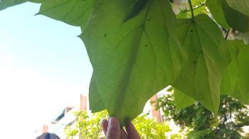 Los insectos son depredadores naturales de aquellos que provocan plagas en los árboles del municipio