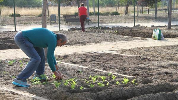 Los adjudicatarios, mayores de 65 años, podrán disfrutar de forma gratuita de los huertos urbanos durante un periodo de dos años
