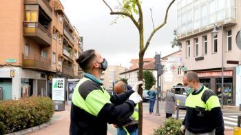 Tras la borrasca Filomena, el Ayuntamiento propuso una estrategia de plantación para suplir lo perdido