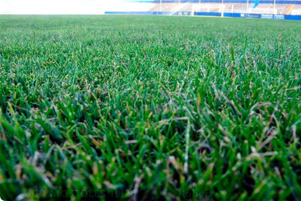 Ambos equipos competirán contra el resto de clubes de la zona sur de Madrid