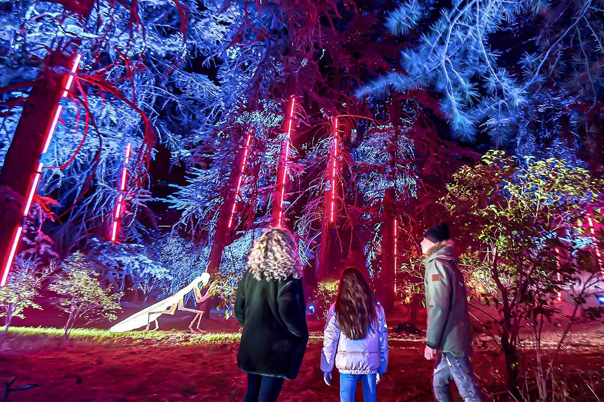 Esta Navidad los jardines volverán a iluminarse con una nueva temática  para hacer las delicias de sus visitantes