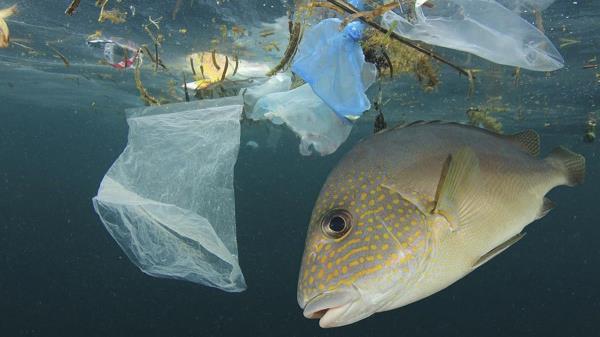 Los productos del mar podrían ser un posible vector de contaminación por metales pesados entre África y Europa