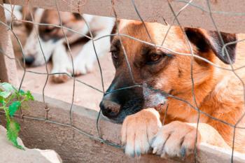 La formación morada denuncia que el Centro Integral Municipal de Protección Animal Alcalá no dispone de los recursos necesarios