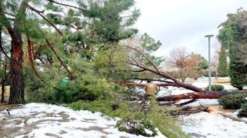 El municipio será decretado zona afectada gravemente por una emergencia de protección civil