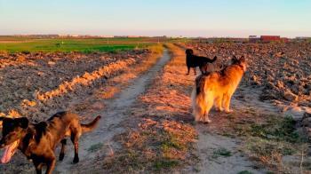 7 imprescindibles a tener en cuenta a la hora del paseo con nuestros perros en verano