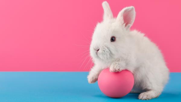 Con un pequeño gesto podemos poner fin a la experimentación con animales