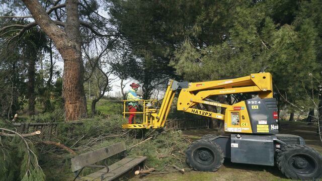 Se ha realizado la retirada de ramas y del arbolado dañado por Filomena