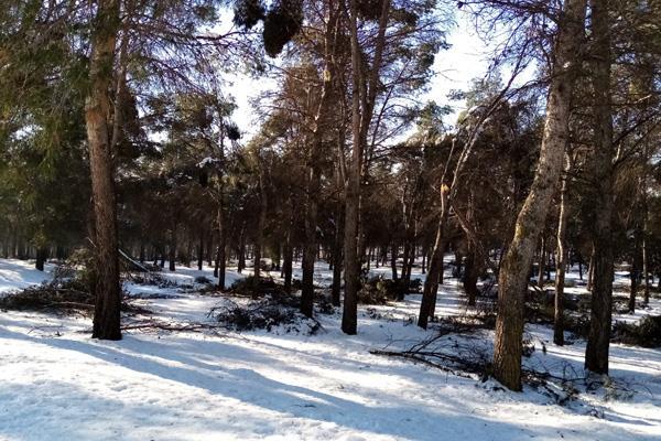 ¿Recibirá Getafe apoyo de los Forestales? Así se lo ha pedido al Gobierno de Ayuso