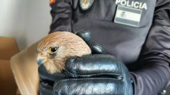 La Policía Local de Navalcarnero dio con el animal gracias a los vecinos