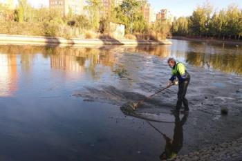 Las especies protegidas se llevarán al CRAS Madrid o se irán a la otras zonas del lago