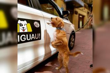 Estos taxistas amantes de los animales te lo ponen fácil para desplazarte con tu compañero