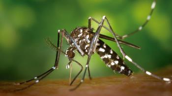 La Concejalía de Salud de Rivas pide colaboración ciudadana para frenar la proliferación de este insecto