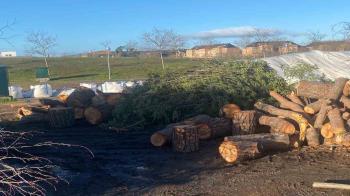 Las pérdidas por el coste y el daño patrimonial que sufrió Majadahonda con el paso de Filomena ascienden a 14 millones de euros