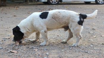 Lee toda la noticia 'Un perro de Getafe muere intoxicado en las calles de la localidad'