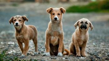Podemos propone construir un Centro de Protección Animal de titularidad municipal