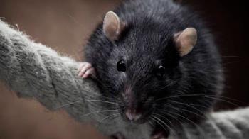 Lee toda la noticia 'Una plaga de ratas amenaza la salud de los vecinos de Méndez Álvaro '
