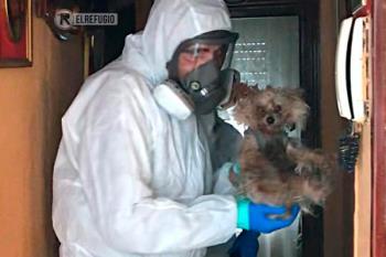 'El Refugio' crea una unidad de intervención para socorrer a las mascotas de las personas hospitalizadas por coronavirus