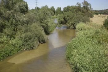 El objetivo es eliminar los residuos sólidos en el cauce del rio entre Móstoles y Arroyomolinos