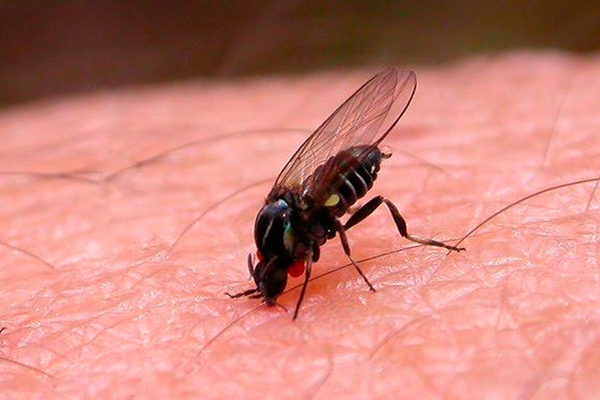 Signos y síntomas de la picadura de mosca